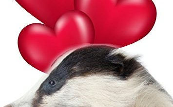 Photo of Badger tv12 Fun Cute Valentine' s Day Card A5 Personalised Greeting Card
